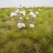 Miniatury kwiatów