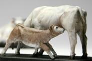 Włoskie Krowy